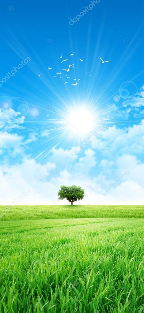 Green like a meadow in the sun