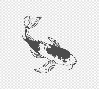 Carp sketch on transparent background. Freehand Japanese carp tattoo. vector illustration icon