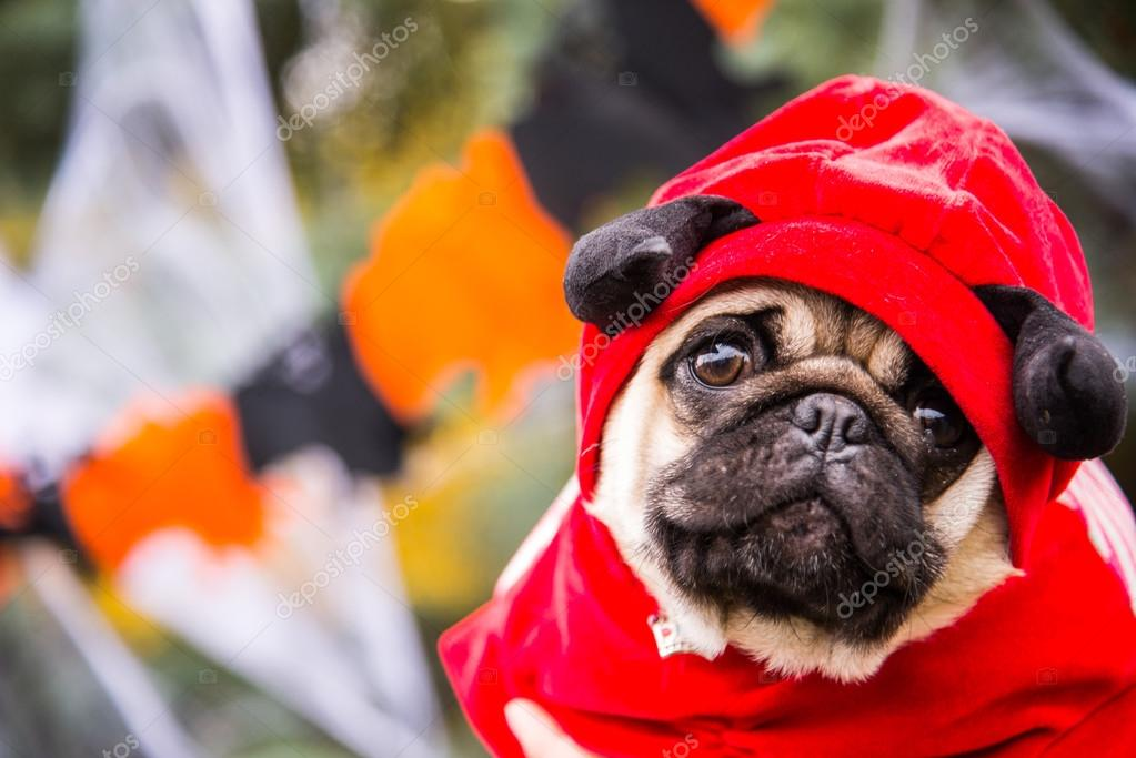 Dog Mops. A dog wearing a devil costume with horns