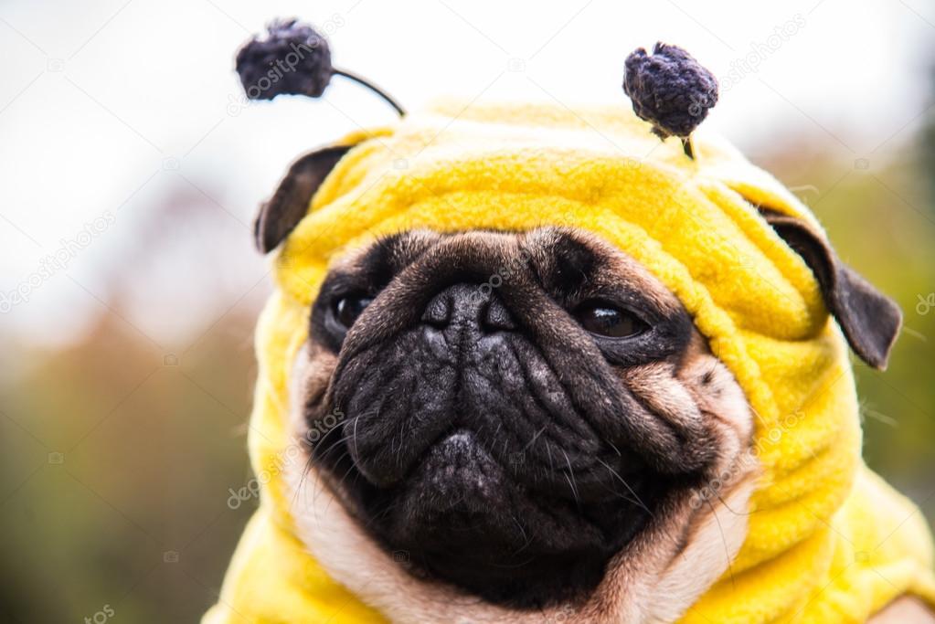 Dog Mops. costume bee