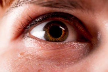 The human eye. macro