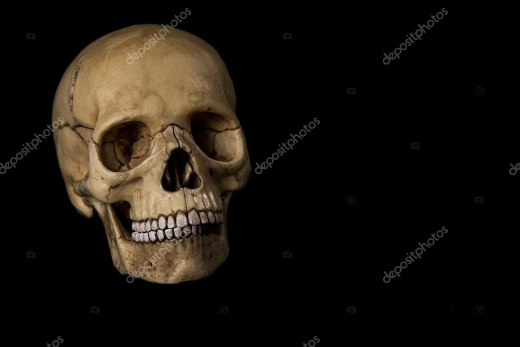 Cráneo humano. quijada — Fotos de Stock © liukov #93245574
