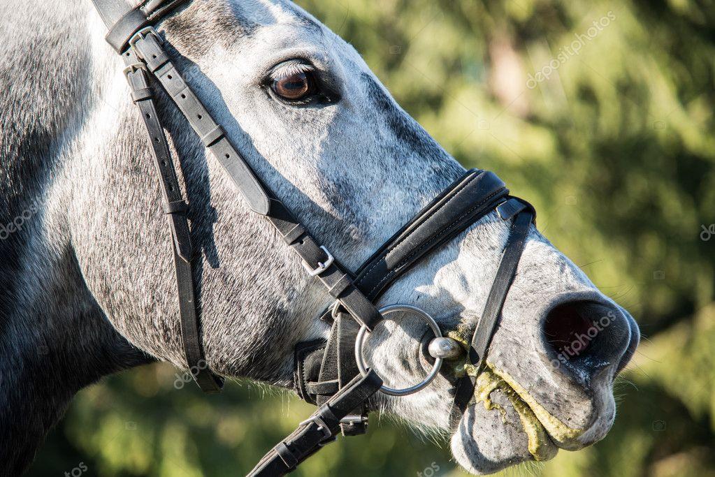 Horse's head. Close-up.