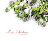 Pobočky vánoční stromek a jiných jehličnatých stromů s zelené šišky a šišky na bílém pozadí. Vánoční pozadí s místem pro text