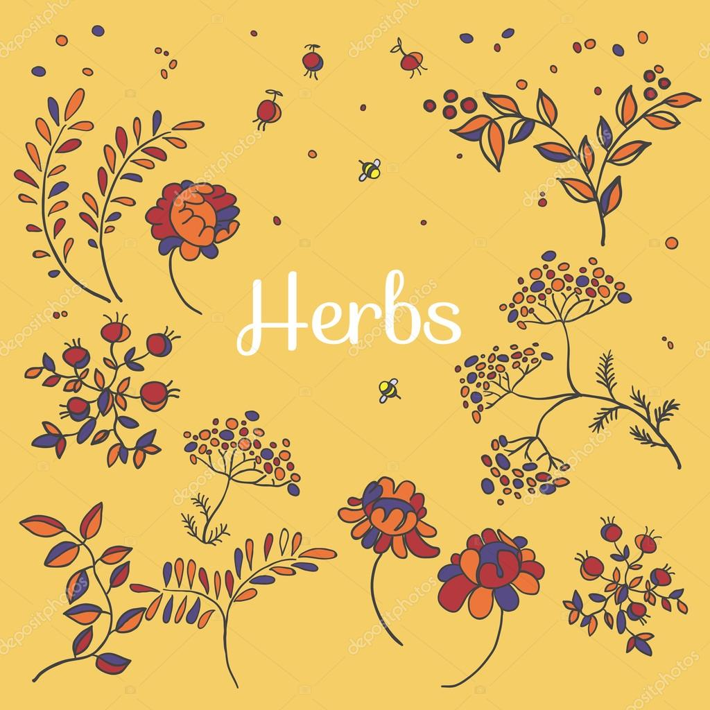 Herbs and flowers set. Hand drawn plants