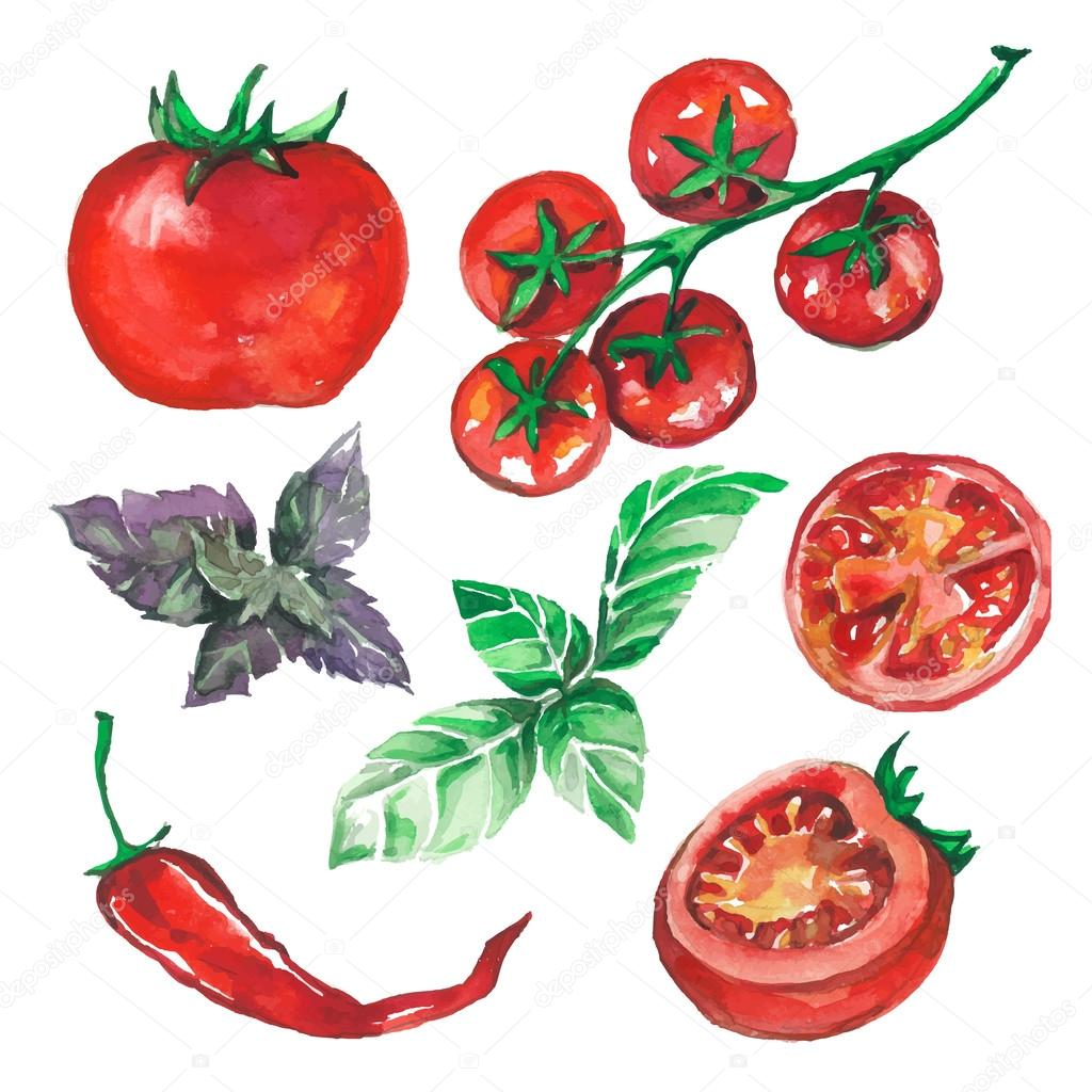vegetables set drawn watercolor blots and stains with tomatoes,