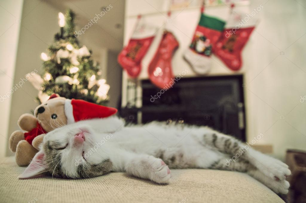 baby cat christmas tree kitten sleeping on his back wit santa toy christmas background and fireplace photo by jdudzinski - Merry Christmas Cat