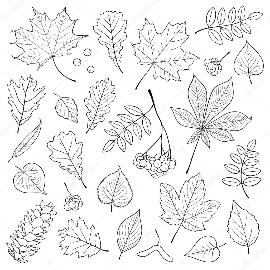vector set of different isolated detailed outline tree leaves