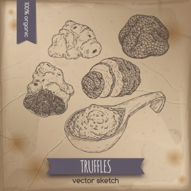 Vintage white, black truffles and sauce sketch on old paper.