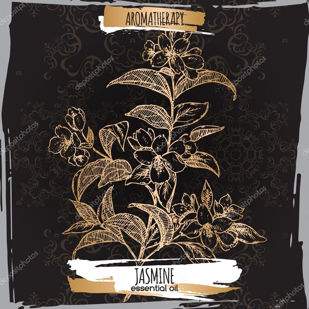 Jasmine sketch on elegant black lace background.