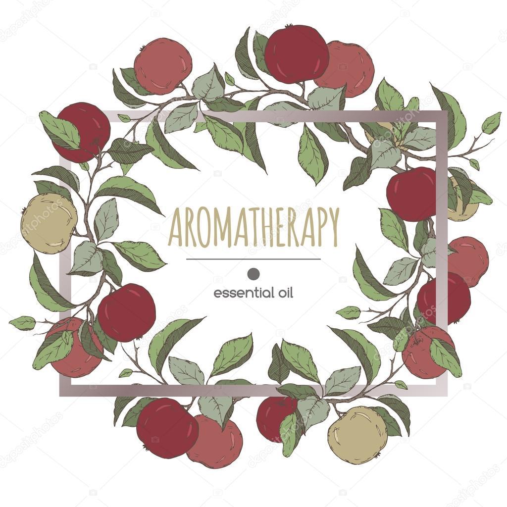 Eleganten Rahmen Vorlage mit Farbe Apfel Früchte und Blätter ...
