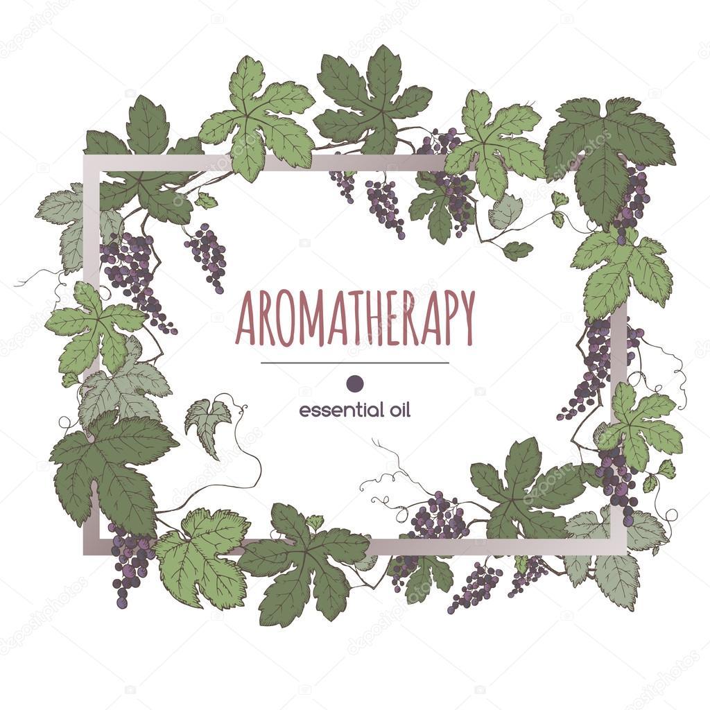 Eleganten Rahmen Vorlage mit Farbe Trauben Früchte und Blätter ...