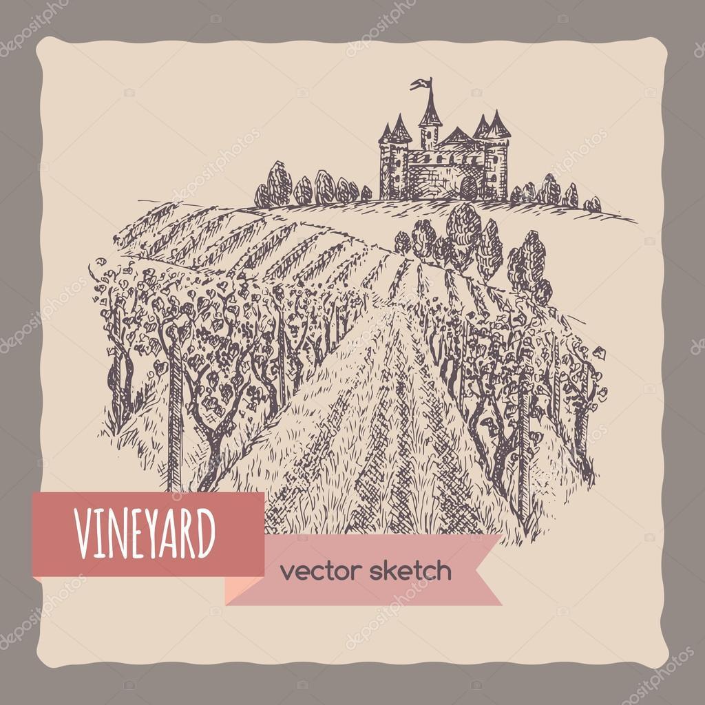 Close up vineyard, castle on a hill landscape