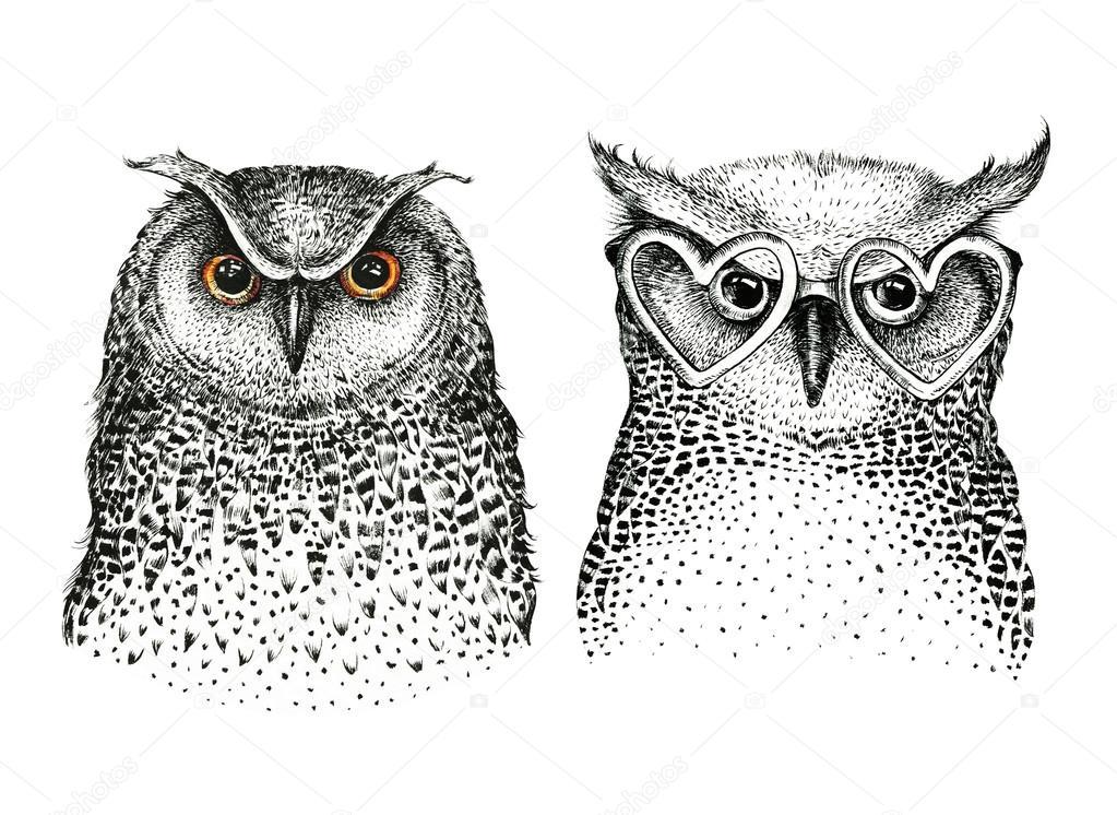 Hand drawn illustration of owls
