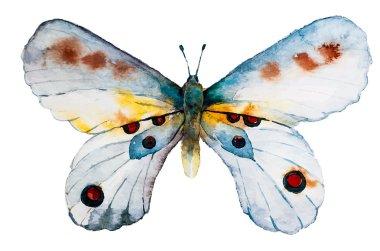 Watercolor Watercolor butterfly