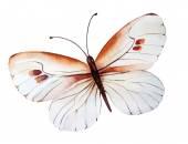 Kézzel festett akvarell pillangó illusztráció