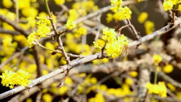 včela na žluté květině