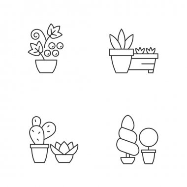 Gardening store categories linear icons set. Succulents and cactus growing in dry and warm climate. Customizable thin line contour symbols. Isolated vector outline illustrations. Editable stroke icon