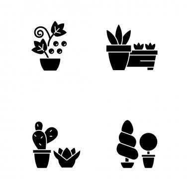Gardening store categories black glyph icons set on white space. Succulents and cactus growing in dry and warm climate. Berry shrubs and vines. Silhouette symbols. Vector isolated illustration icon