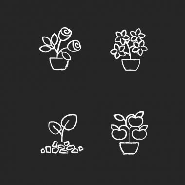 Gardening store categories chalk white icons set on black background. Flowering tree shrubs. Growing natural foods in home garden. Gardening hobby. Isolated vector chalkboard illustrations icon