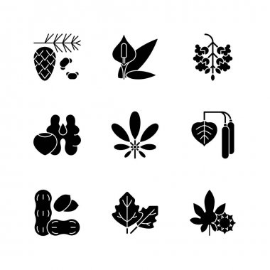 Allergens and allergy causes black glyph icons set on white space. Cedar, pine tree pollen. Peace lily. Poplar tree pollen. Tree nuts, peanut. Silhouette symbols. Vector isolated illustration icon