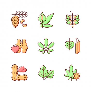 Allergens and allergy causes RGB color icons set. Cedar, pine tree pollen. Peace lily. Poplar tree pollen. Tree nuts, peanut. Alergic reaction. Food intolerance. Isolated vector illustrations icon