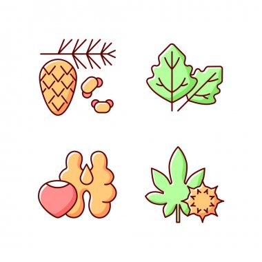 Cause of allergic reaction RGB color icons set. Cedar and pine tree pollen. Lambs quarters. Tree nuts. Castor bean. Reason of allergy and food intolerance. Isolated vector illustrations icon