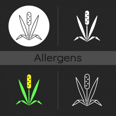 Timothy grass dark theme icon. Herbal allergen. Cause of allergic reaction. Wild field foliage. Allergy for plant. Linear white, simple glyph and RGB color styles. Isolated vector illustrations icon