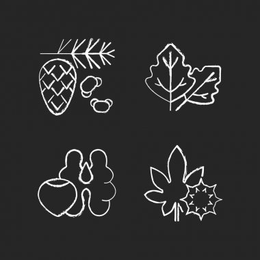 Cause of allergic reaction chalk white icons set on black background. Cedar and pine tree pollen. Lambs quarters. Tree nuts, walnut, hazelnut. Castor bean. Isolated vector chalkboard illustrations icon