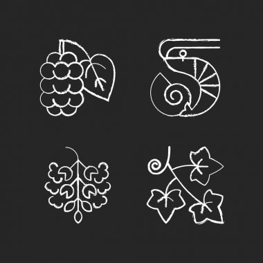 Seasonal allergen causes chalk white icons set on black background. Mulberry on branch. Crustacean and mollusc. Poplar tree pollen. English ivy. Isolated vector chalkboard illustrations icon