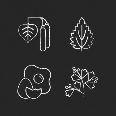 Intolerance for allergen chalk white icons set on black background. Birch pollen. Nettle leaf. Cracked egg. Growing sagebrush. Cause of allergic reaction. Isolated vector chalkboard illustrations icon
