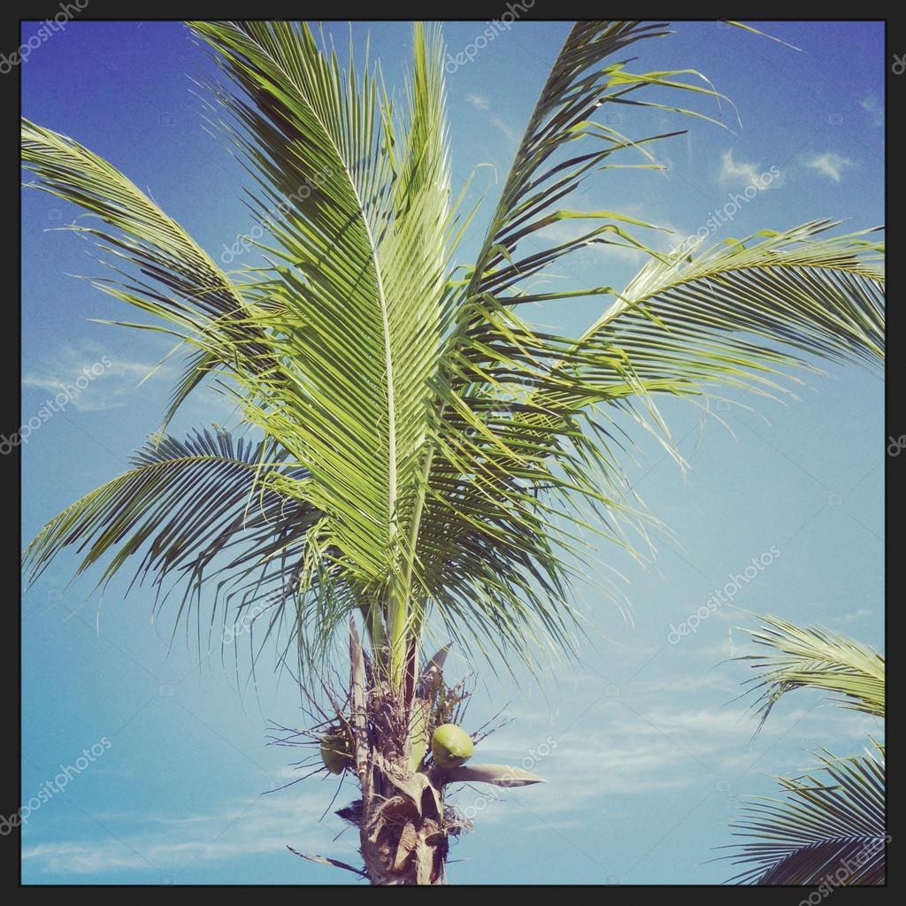 Closeup Instagram von Palm-Baum-Swayingin der Wind mit Rahmen ...