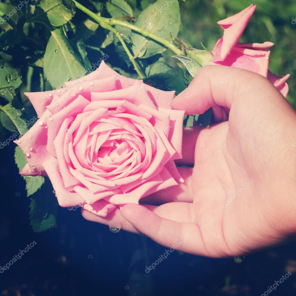Instagram of childs hand supporting pink rose — Stock Photo
