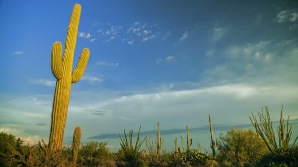 Západní kaktus časová prodleva