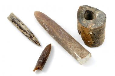 Belemnite fossil on isolated background