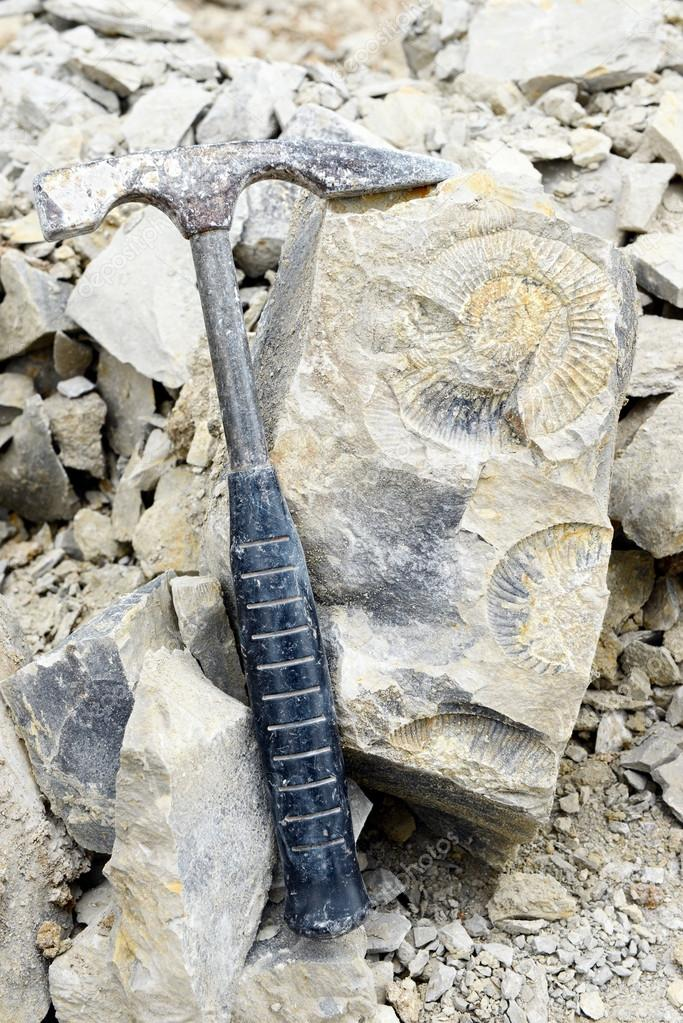 fossilized ammonite in rock with hammer tool