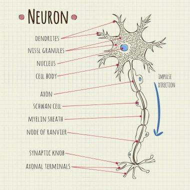 vector illustration neuron chart