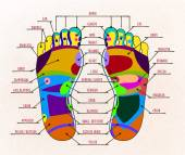 Fotografie Abbildung menschliche Fußreflexzonen