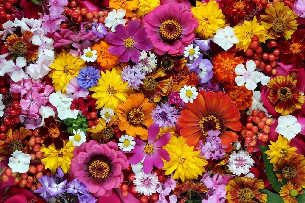 Background of garden flowers and berries, top view. \u2014 Stock
