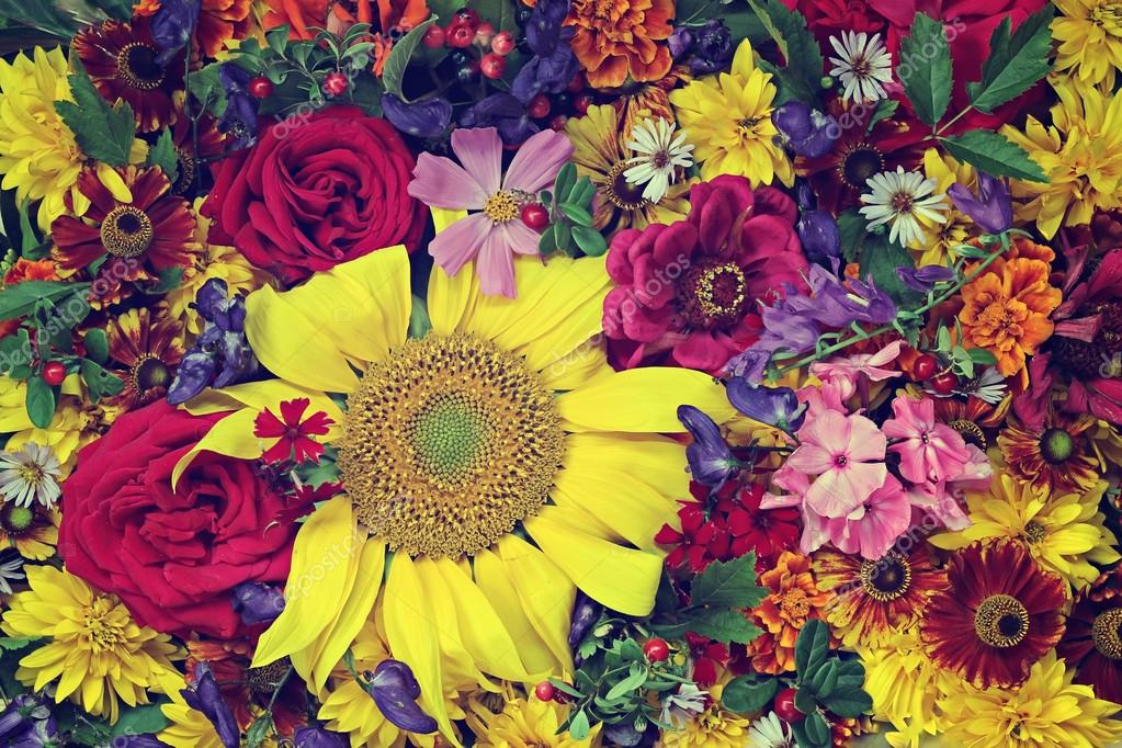 Flower background. A background from cultivated flowers, the top