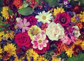 Photo Flower background. A background from cultivated flowers.