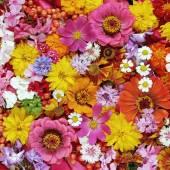 Pestré květinové pozadí. Pozadí z květů