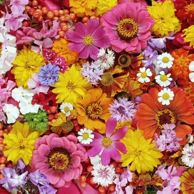 Colourful flower background. A background from flowers.