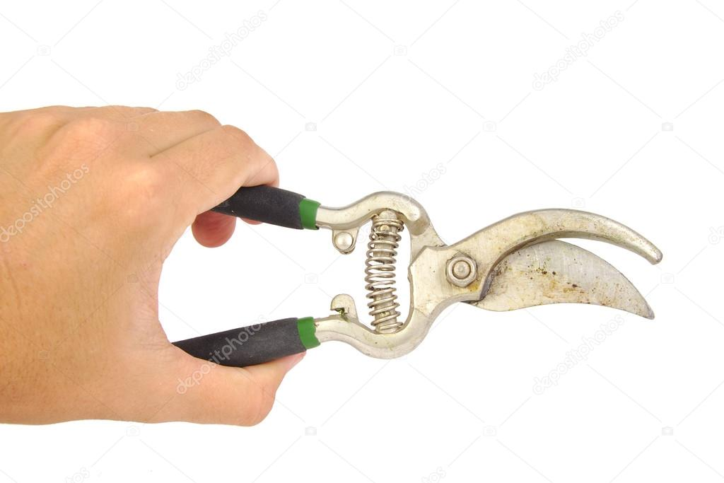 Hand holding pruning shears or garden scissors isolated on a white background