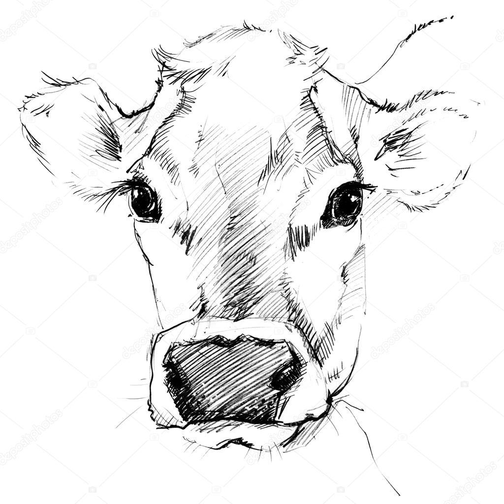 Vaca Dibujo De Vaca Dibujo A Lápiz Vaca Lechera Animales De