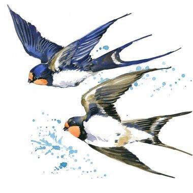 Swallow. Swallow watercolor illustration. Spring Bird. Bird Swift. Swift flight