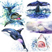 Undersea life. Watercolor sea animal. Sea Life set. Watercolor marine animals set. dolphin, whale, killer whale, shark, sperm whale