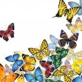 Fényképek pillangó háttér