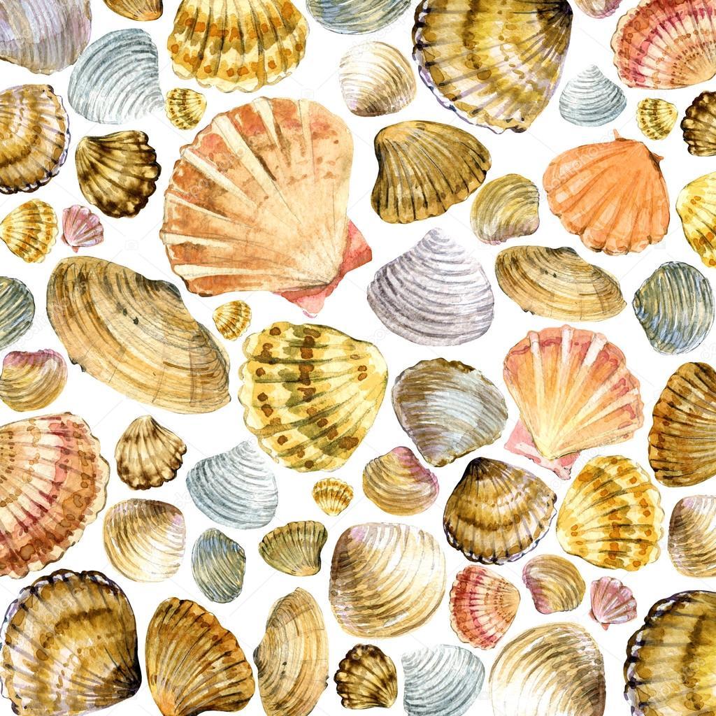 Sea shell watercolor