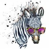 Vicces zebra akvarell illusztráció